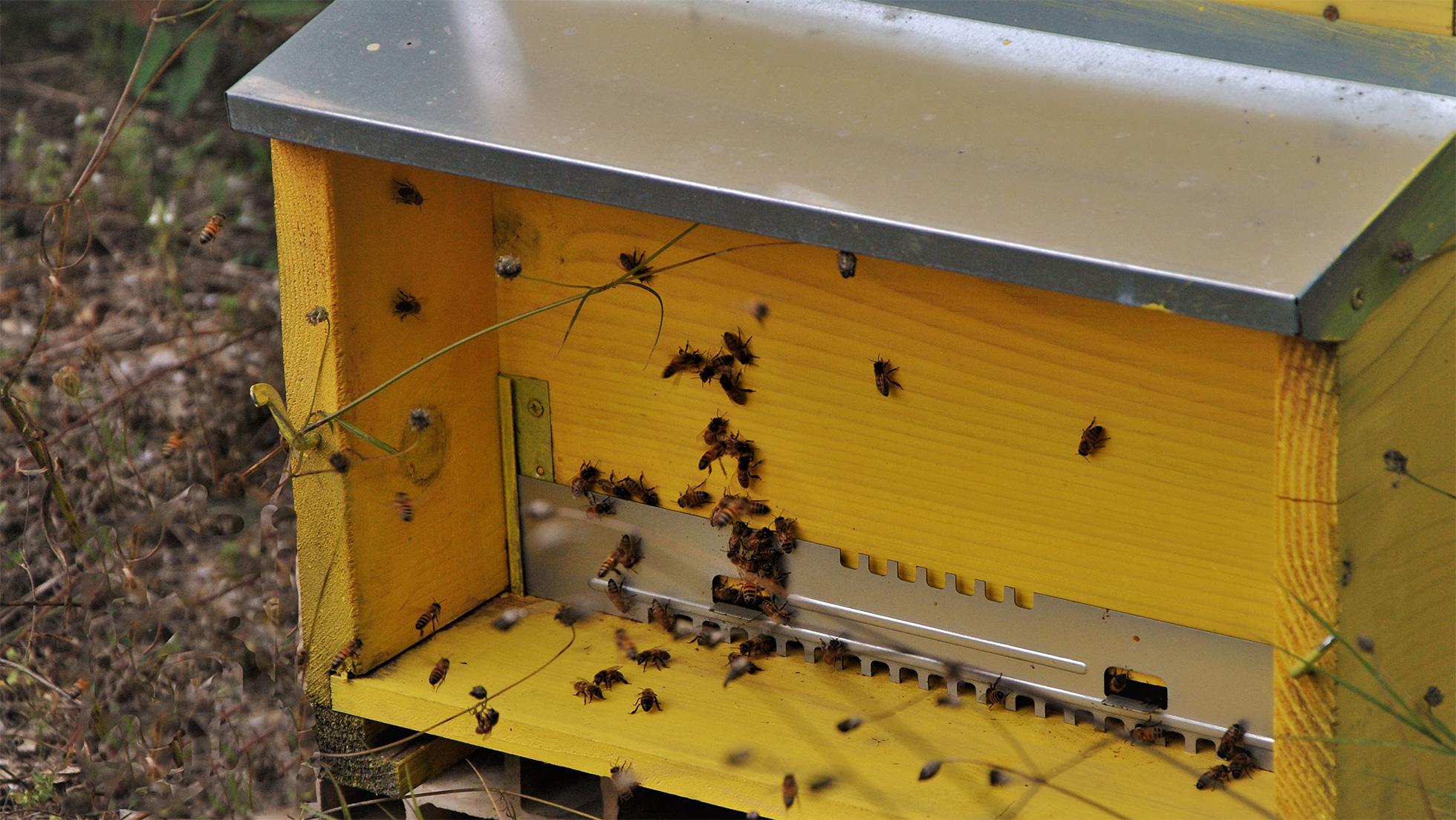 parco-dell-orte-api